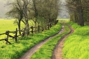 green meadow path
