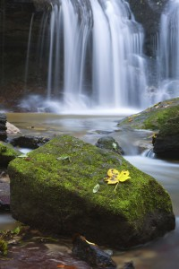 waterfall and leaf